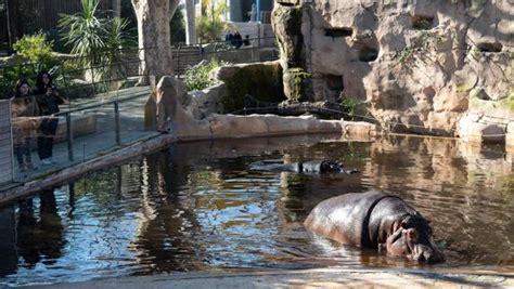 Barcelona solo quiere especies autóctonas en su zoo