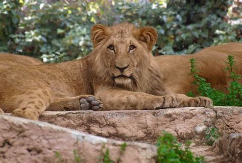 Barcelona Zoo   2019 All You Need to Know Before You Go ...