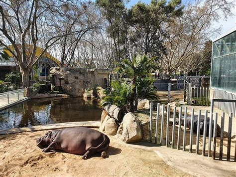 Barcelona Zoo   2020 All You Need to Know BEFORE You Go ...