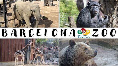 Barcelona Zoo 2020   YouTube