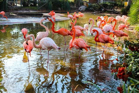 Barcelona Zoo a must see place for kids