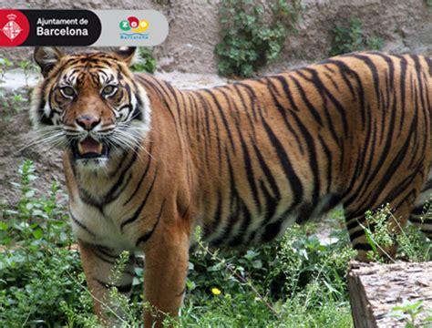 Barcelona Zoo   AttractionTix
