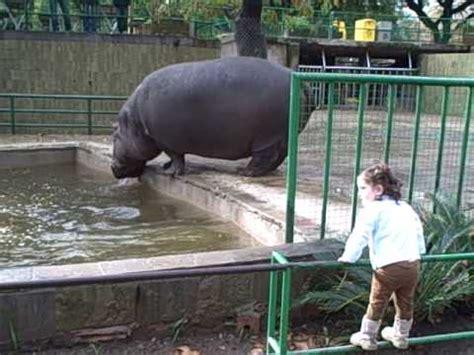 Barcelona Zoo   Hippo   YouTube