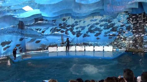 BARCELONA   Zoo   pokaz delfinów VISITCITY24.COM   YouTube