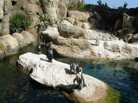 Barcelona Zoo   Practical information, photos and videos ...