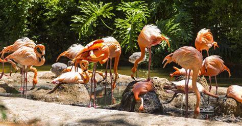 Barcelona Zoo Ticket Barcelona, Spain   Klook