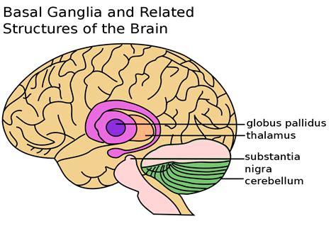 Basal ganglia disease   Wikipedia