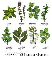 Basil Plant Stock Illustration | Our Top 190 Basil Plant ...