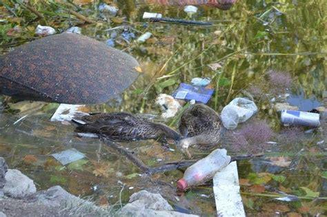 Basura y aguas contaminadas en siete acuíferos de la ...