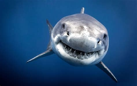 Bathers flee Spanish beach after  shark  spotted
