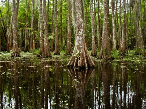 bayou | National Geographic Society