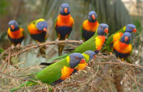 BBC   Bristol   Feed exotic birds in new display