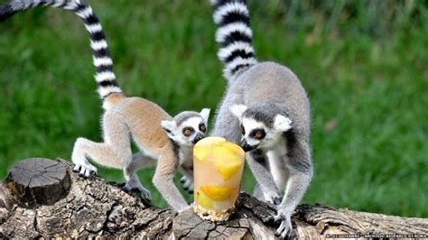 BBC News   In pictures: How Rome Zoo s animals keep cool