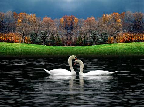 Beautiful Birds...   Beautiful Nature Photo  23813827 ...