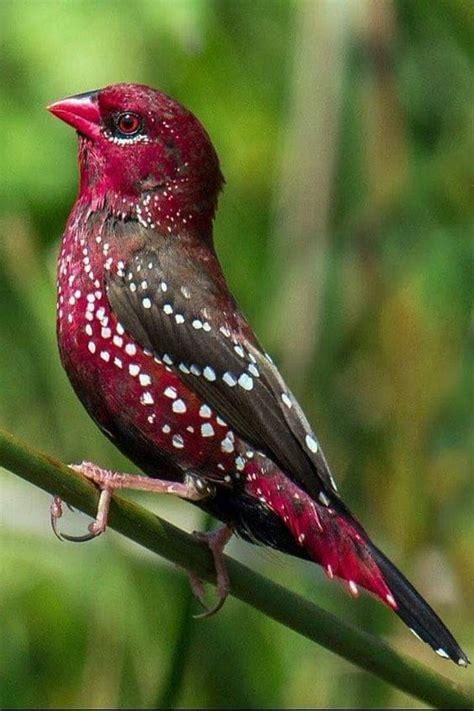 beautiful birds   Birds Photo  42649209    Fanpop