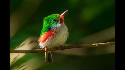 Beautiful Birds HD 1080p   YouTube