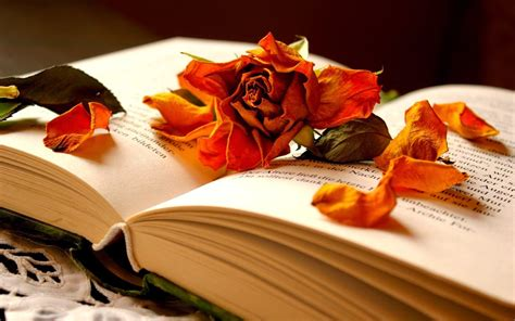 Beautiful Books « Best Wallpapers 4 you