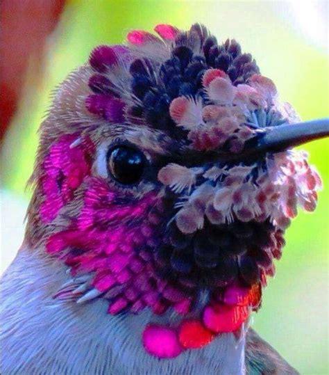 Beautiful Hummingbird | Aves exoticas del mundo, Aves ...