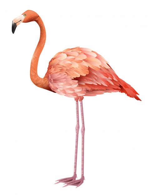 Beautiful pink flamingo standing. for banners, posters ...