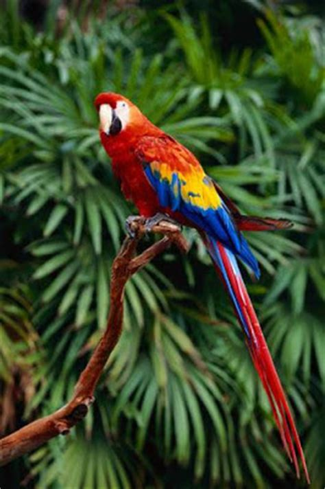 Beautiful Types of parrots | Curious, Funny Photos / Pictures