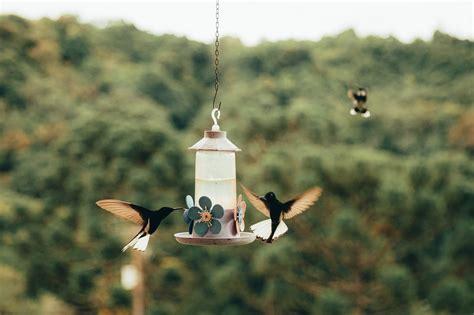 Bebederos para aves para jardín.   El Jardín de Venus