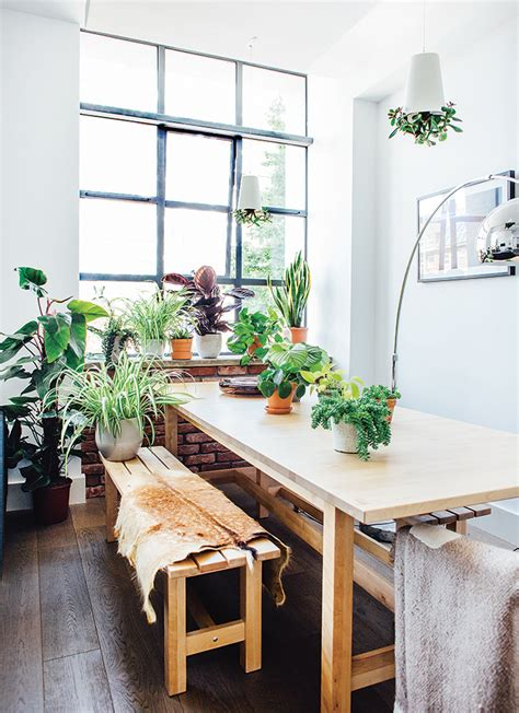 Beginner s guide: How to choose and care for indoor plants ...