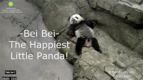 Bei Bei   The Happiest Little Panda  & ChiChi!    YouTube