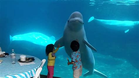 Beluga whales and 2 kids   YouTube