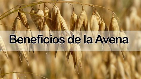 Beneficios de la Avena   Conoce TODAS las Propiedades de ...