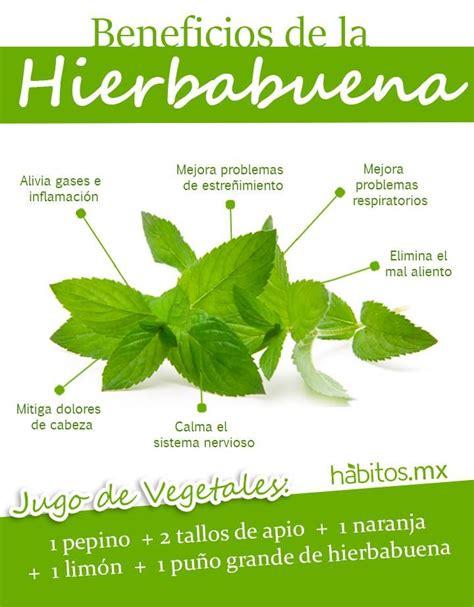 Beneficios de la hierbabuena   Saludable y natural   Pinterest