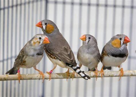 Beneficios de tener aves