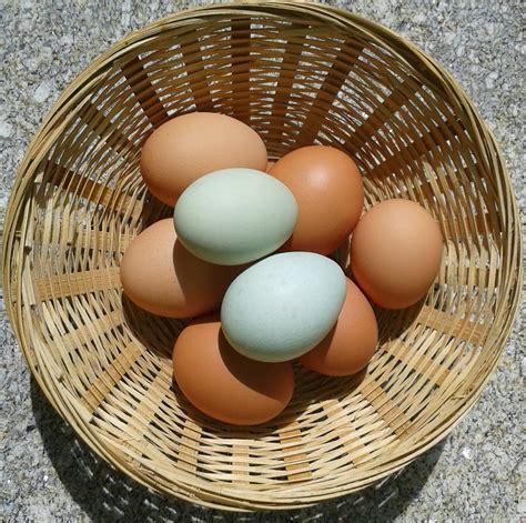 beneficios del huevo azul   CocinaDelirante