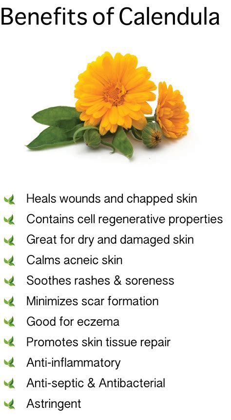 Benefits of Calendula. Also known as Marigold #Saiva # ...