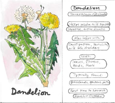 Benefits Of Dandelion Flower Essence | Best Flower Site