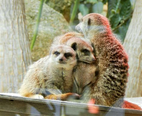 Best Animal Attractions Around Melbourne   Melbourne