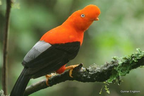 Best bird of the world