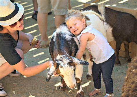 Best Petting Zoos around LA Where Kids Can Get Their ...