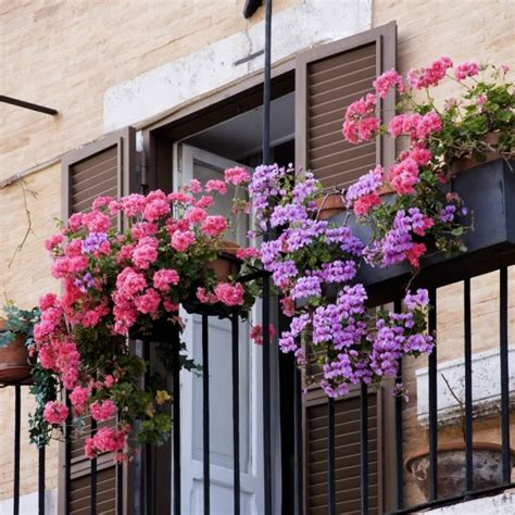 Best Plants For Sunny Balcony Ideas To Achieve A Beautiful ...