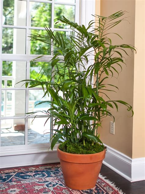 Best Plants That Reduce Humidity Indoors | Balcony Garden Web