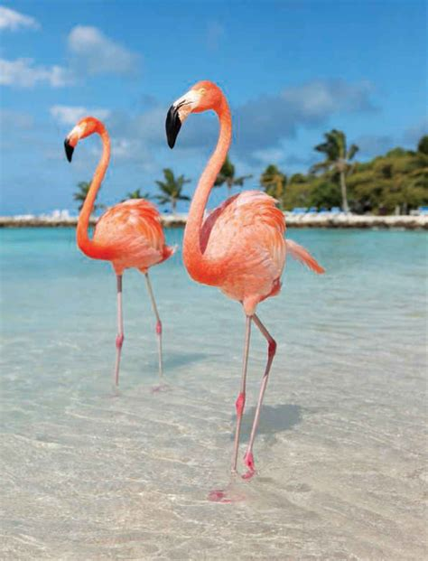 Best Things to Do in Aruba | Flamingo, Flamingo pictures ...