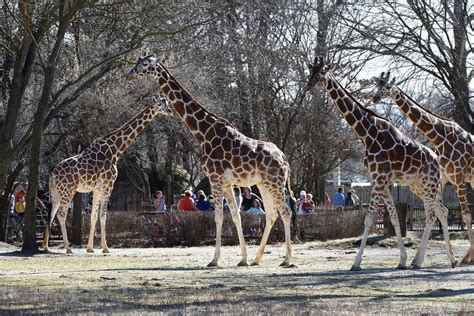 Best Zoo Winners: 2017 10Best Readers  Choice Travel Awards