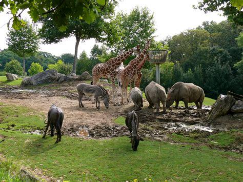Best Zoos in Europe | Top 10   Page 4 of 10   Alux.com