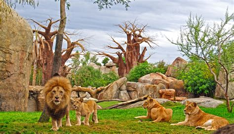 Best Zoos in Europe   Top 10   Page 6 of 10   Alux.com