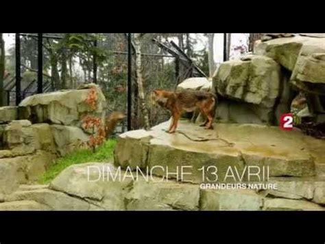Bienvenue au zoo de Paris !  France 2    YouTube