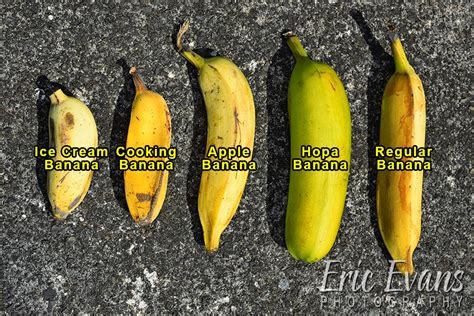 Big Mamas Tropical Fruit   Aloha Multimedia GroupAloha ...