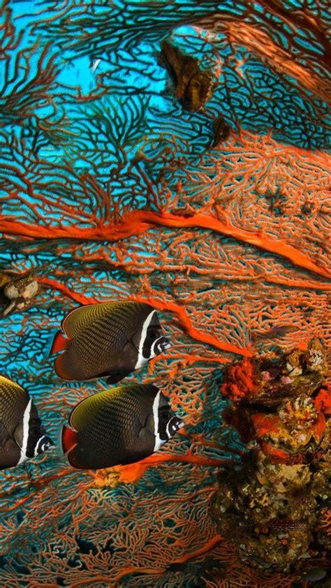 Bing fish landscapes Wallpaper |  51429