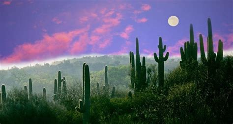 Bing Image Archive: Full moon over the Sonoran Desert in ...