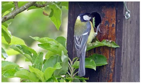 Biodiversidad de aves insectívoras en pumaradas de sidra ...