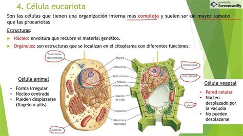 Biología 1º ESO UD. 5 La Biosfera. Colegio Peñafort.   YouTube