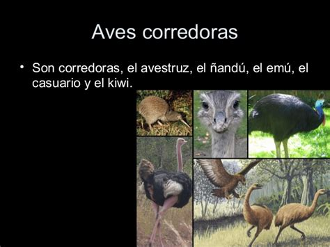 Biologia 5   Animales: Reptiles y Aves